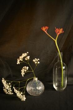 Transparencia y flores
