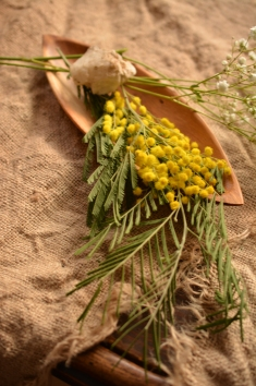 Mimosa sobre arpillera